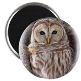 Owls Magnets