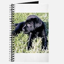 Coal Puppy Journal
