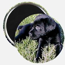 Coal Puppy Magnet