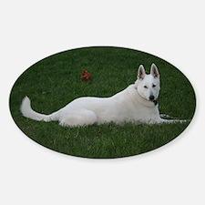 White Shepherd Oval Decal