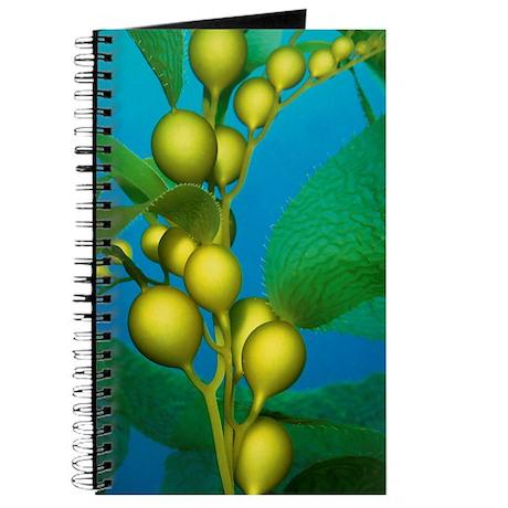 Kelp Close-Up Journal