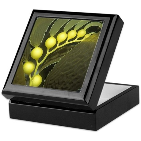Kelp Bulbs Keepsake Box