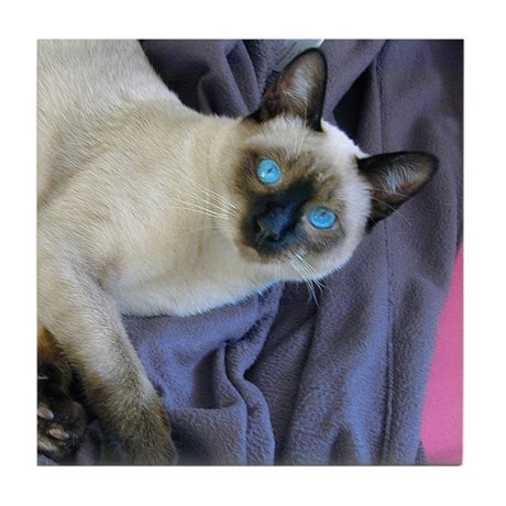 Tile Coaster - Sam, the Siamese cat
