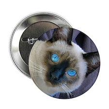 """2.25"""" Button - Sam, the Siamese cat"""