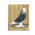 Silver Check Bald Postcards (Package of 8)