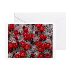 Desert Cactus Greeting Cards (Pk of 20)