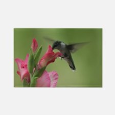 Hummingbird And Gladiolas Rectangle Magnet Magnets