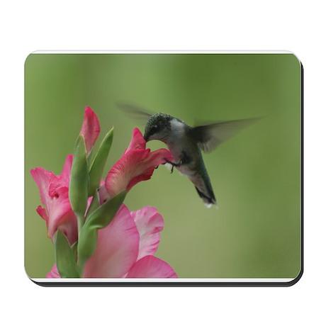 Hummingbird And Gladiolas Mousepad