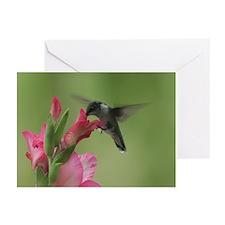 Hummingbird and Gladiolas Greeting Cards (Pk of 1