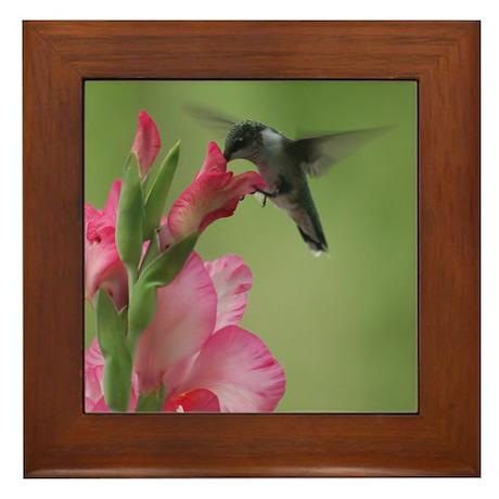 Hummingbird and Gladiolas Framed Tile
