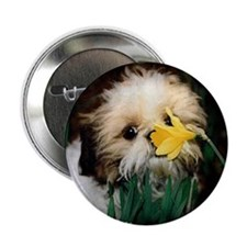 """Shih Tzu puppy 2.25"""" Button"""