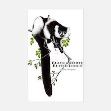 Black & White Ruffed Lemur Rectangle Decal