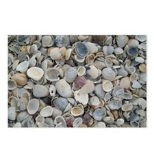 Sea Shell Postcards (Package of 8)