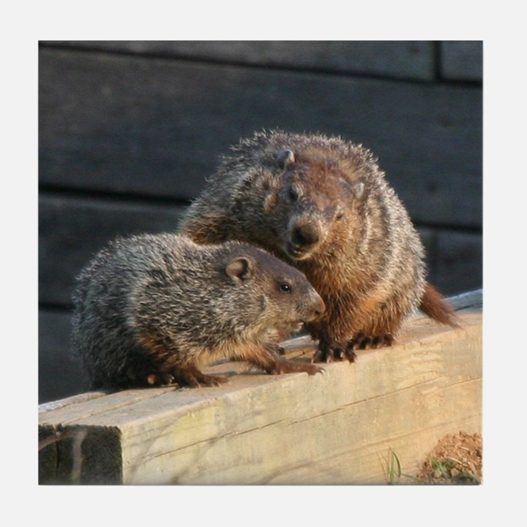 Groundhog Family Tile Coaster