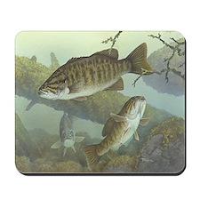 Three Smallmouth Bass