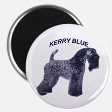 Cute Kerry blue terrier Magnet