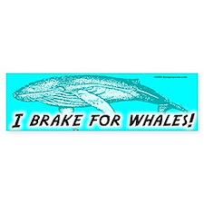 Whales Bumper Bumper Sticker