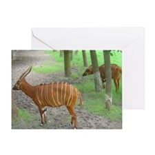 bongos Greeting Card