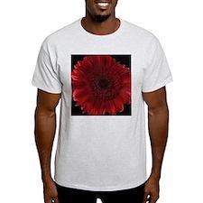 Burgundy Shasta Daisy T-Shirt