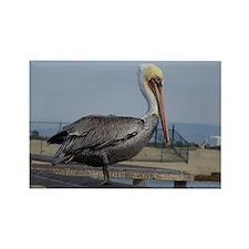 Brown Pelican Rectangle Magnet