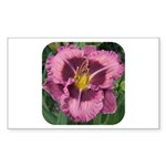 Macbeth Daylily Rectangle Sticker
