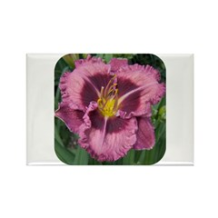 Macbeth Daylily Rectangle Magnet (10 pack)