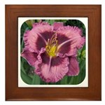 Macbeth Daylily Framed Tile