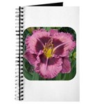 Macbeth Daylily Journal