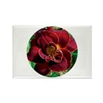 Night Embers Daylily Rectangle Magnet (10 pack)