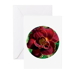 Night Embers Daylily Greeting Cards (Pk of 20)