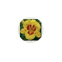 Fooled Me Daylily Mini Button (100 pack)