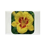 Fooled Me Daylily Rectangle Magnet (10 pack)