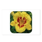 Fooled Me Daylily Postcards (Package of 8)