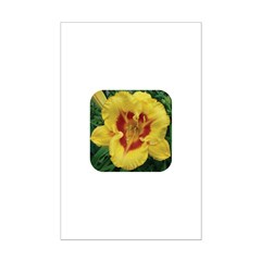 Fooled Me Daylily Posters