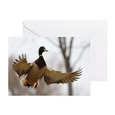Morning Flight Greeting Cards (Pk of 10)