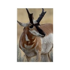 Pronghorn Rectangle Magnet (10 pack)