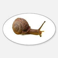 Snail Oval Decal