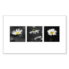 B&W Daisy Triptych Rectangle Decal