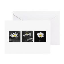 B&W Daisy Triptych Greeting Cards (Pk of 20)
