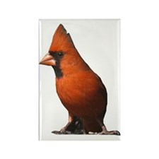 Red Cardinal Rectangle Magnet (100 pack)