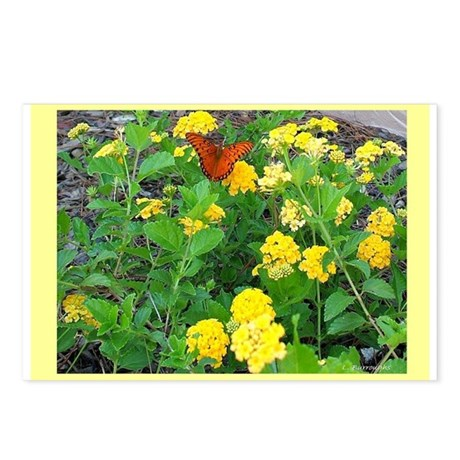 Butterfly Bush with Butterfly Postcards (Package o