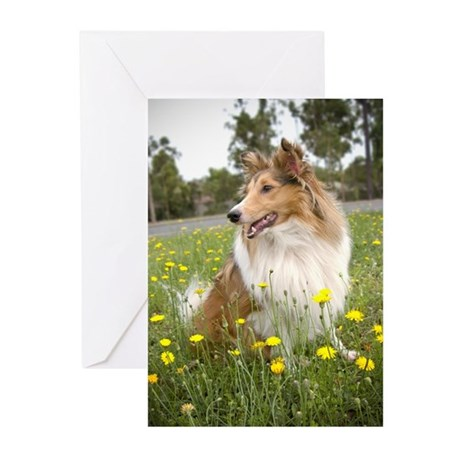 Sheltie & Flowers Greeting Cards (Pk of 10)