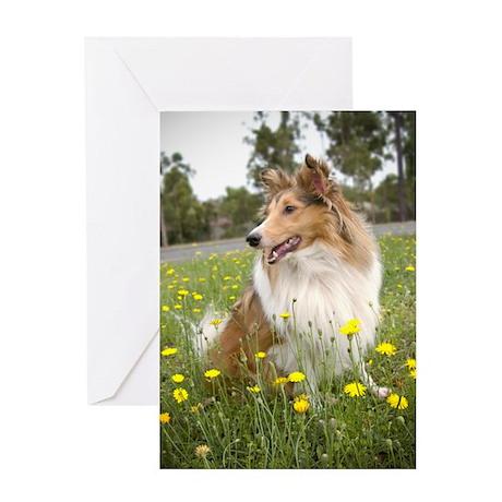Sheltie & Flowers Greeting Card