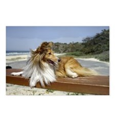 Sheltie on the Beach Postcards (Package of 8)