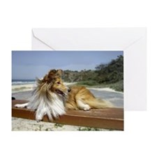 Sheltie on the Beach Greeting Card