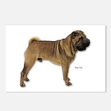 Shar Pei Dog for Shar Pei Lovers Postcards (Packag