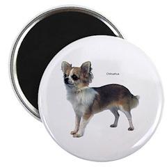 Chihuahua Dog 2.25