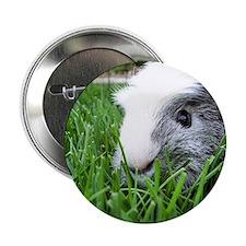 Cute Piggie Button