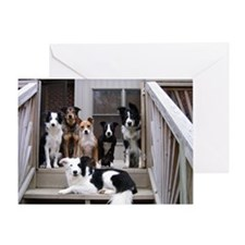 Cute Border collie Greeting Card