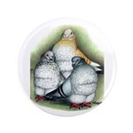 Chinese Owl Pigeons 3.5